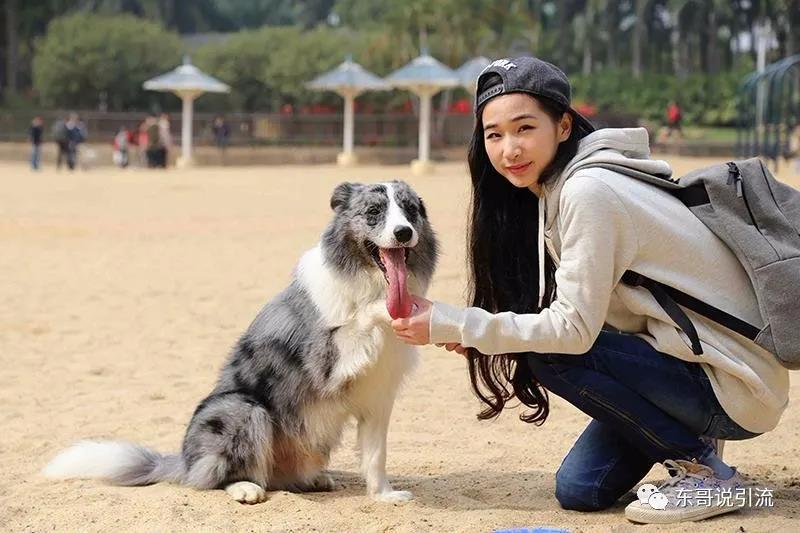 朱莉网络赚钱-宠物训练,一个不开店也能做的赚钱项目
